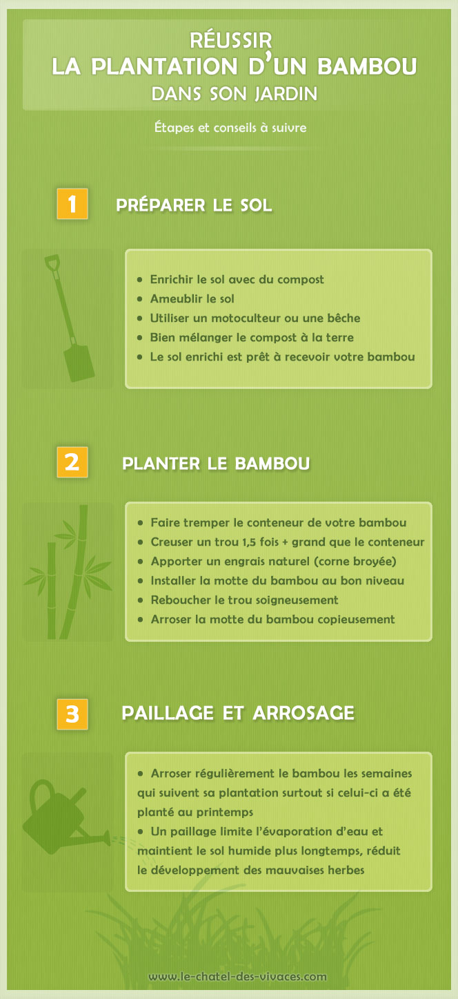 comment planter un bambou conseils de plantation. Black Bedroom Furniture Sets. Home Design Ideas